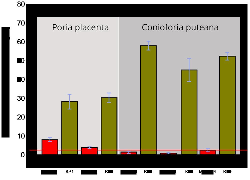 Abbildung 01: Mit nano-Metallfluoriden imprägniertes Holz zeigt bei Pilzbefall ein deutliche fungizide Wirkung