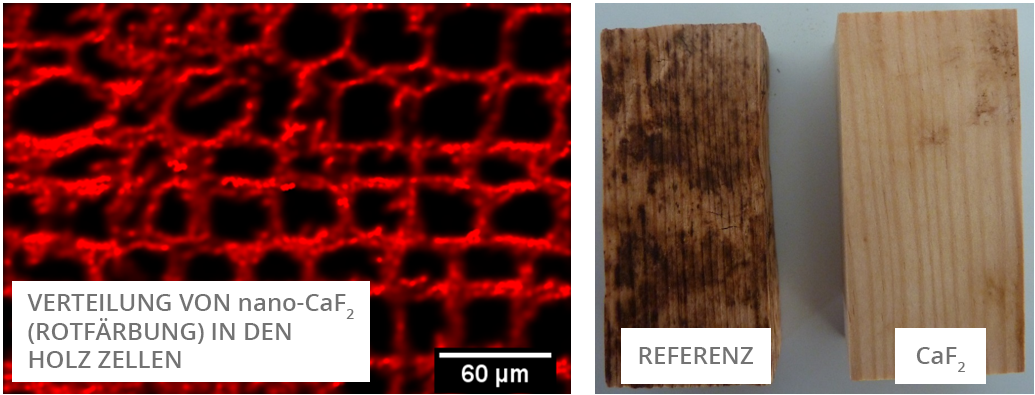 Abbildung 2: Verteilung von CaF<sub>2</sub>(roter Bereich) in Holz Zellen (links), mit CaF<sub>2</sub> imprägniertes Holz im Vergleich zur Referenz nach Pilzbefall (rechts)