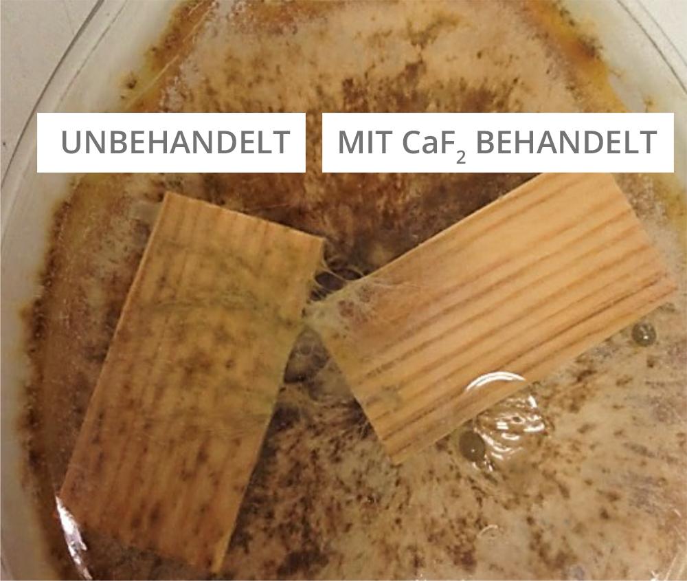 Abbildung 3: Mit CaF<sub>2</sub> imprägniertes Holz im Vergleich zur Referenz nach Pilzbefall