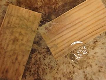 Mit CaF<sub>2</sub> imprägniertes Holz im Vergleich zur Referenz (links)  nach Pilzbefall